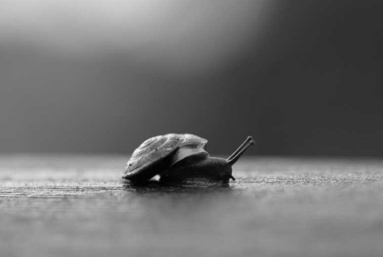 Tenk fort – eller langsomt